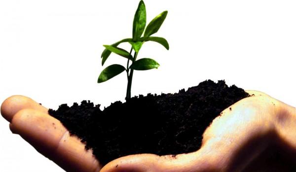 startup-grow-600x349_technokrata.hu